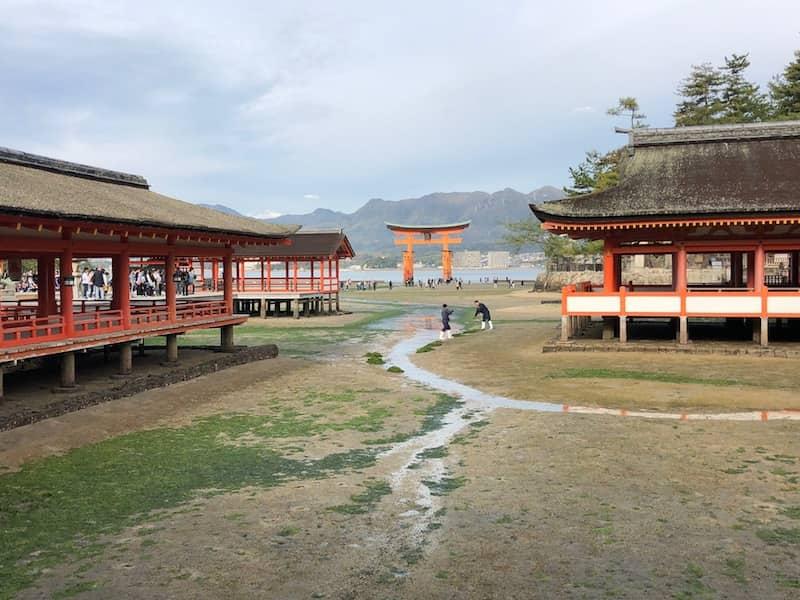 厳島神社の社殿とあおさを掃除する人