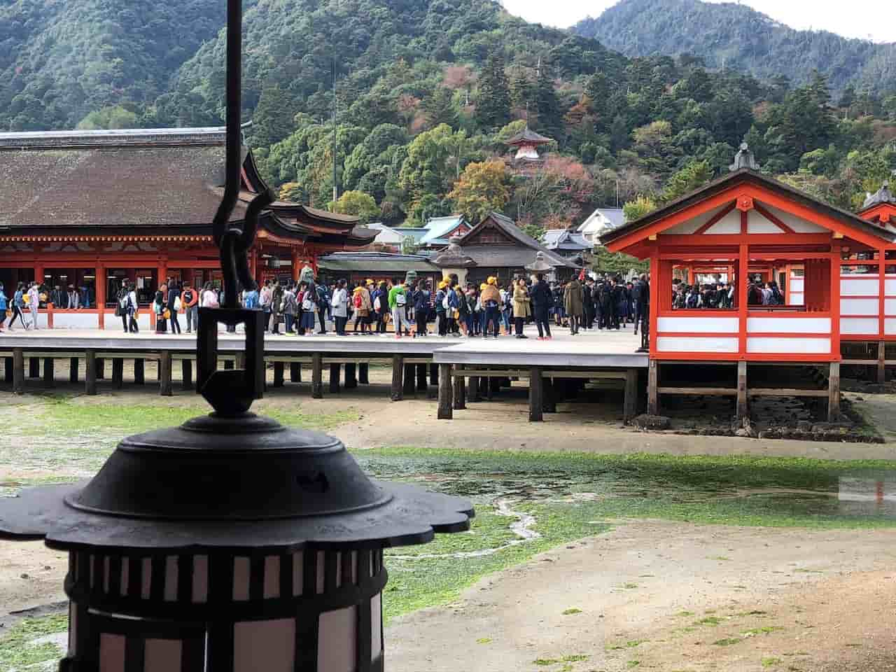 厳島神社の本殿に参拝する人たち