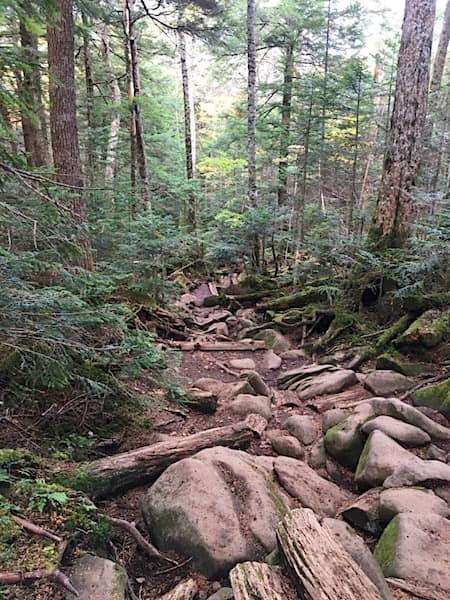 高見の森コースの山道