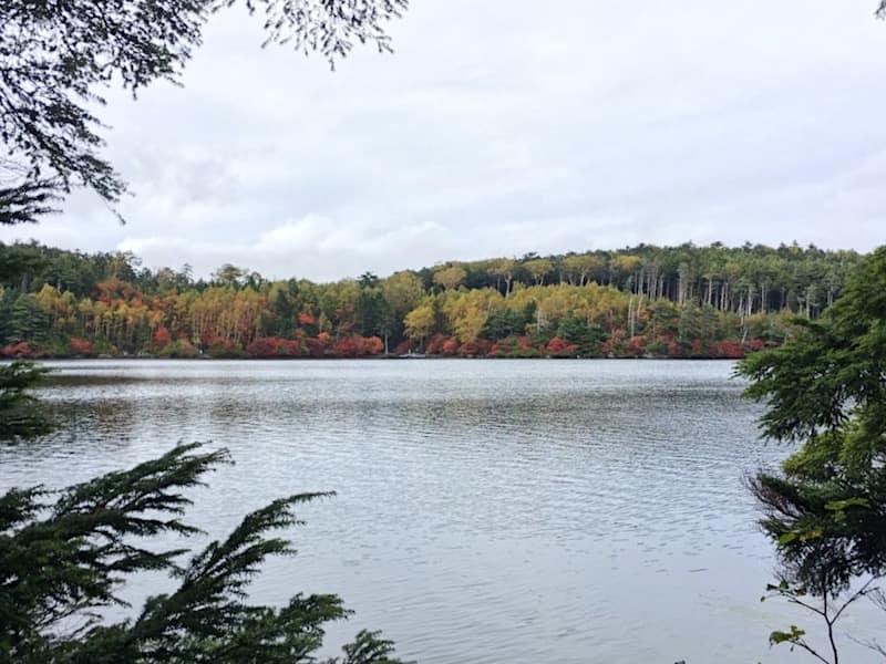 白駒池の写真