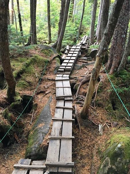 木で作られた遊歩道