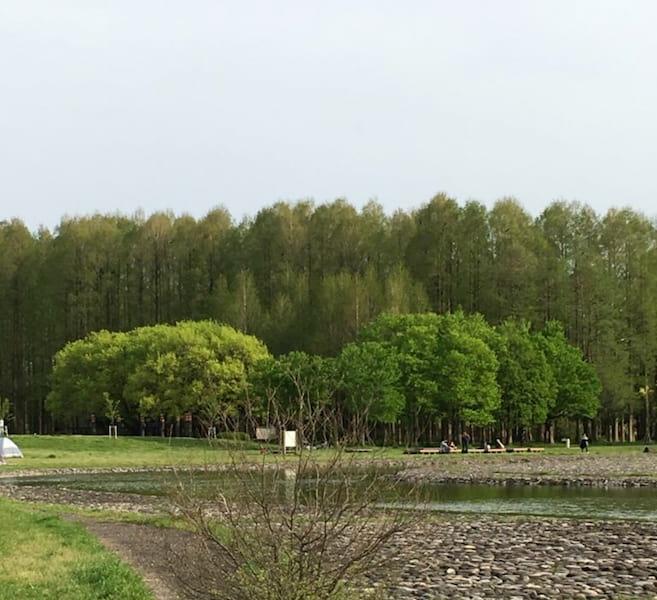 水元公園の森と林と水の浅瀬