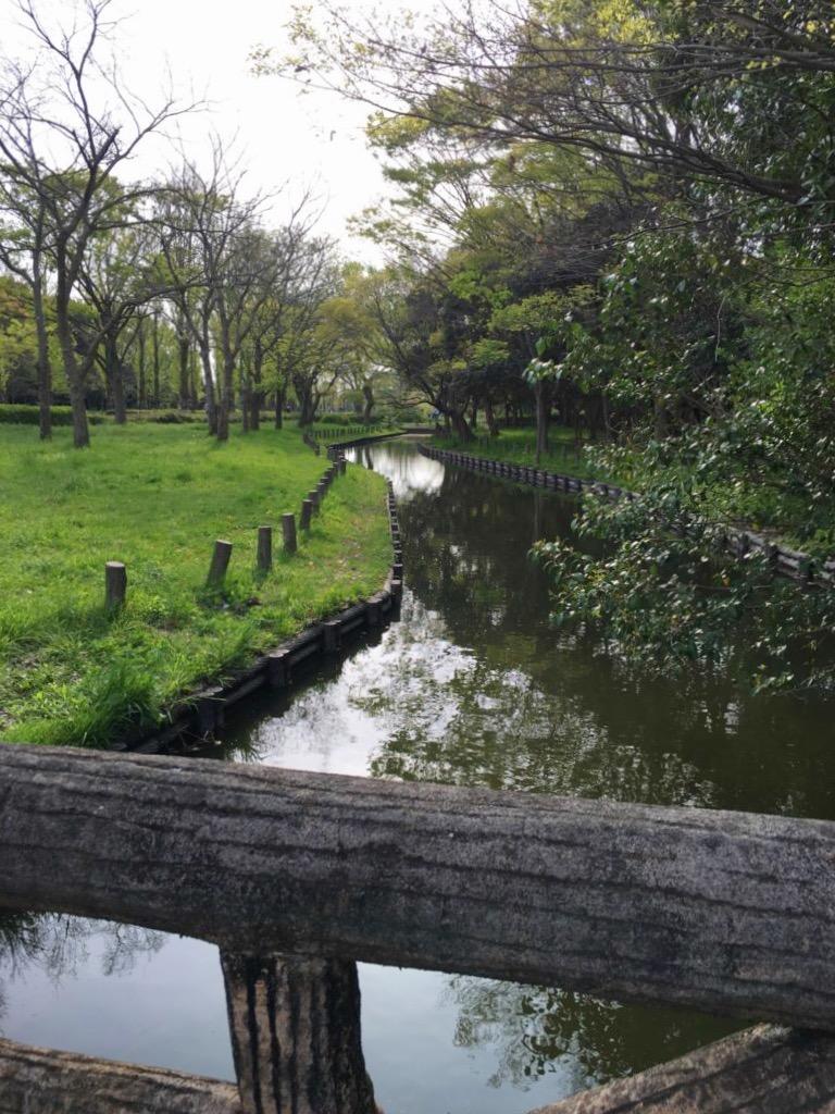 水元公園の芝生広場と水路