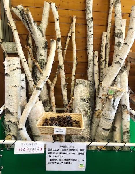 女神湖センターの白樺の木