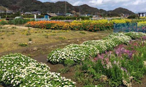 房総半島の花畑