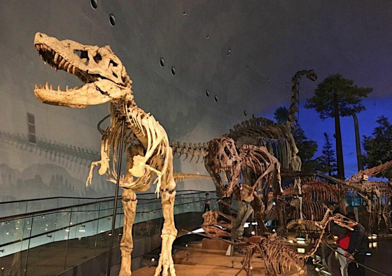 実物大の骨格標本