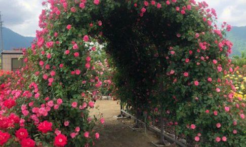 坂城のバラ祭り