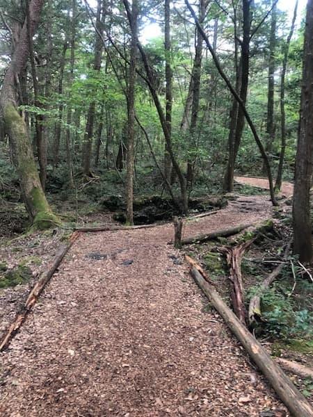 コウモリ穴までの散策路
