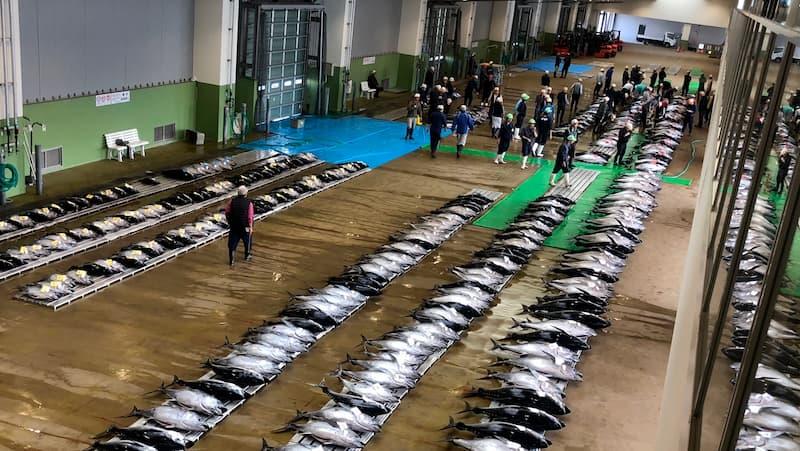 銚子港のマグロのセリ