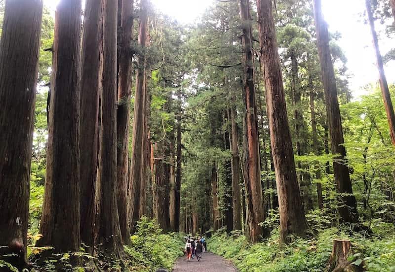 戸隠奥社の杉並木