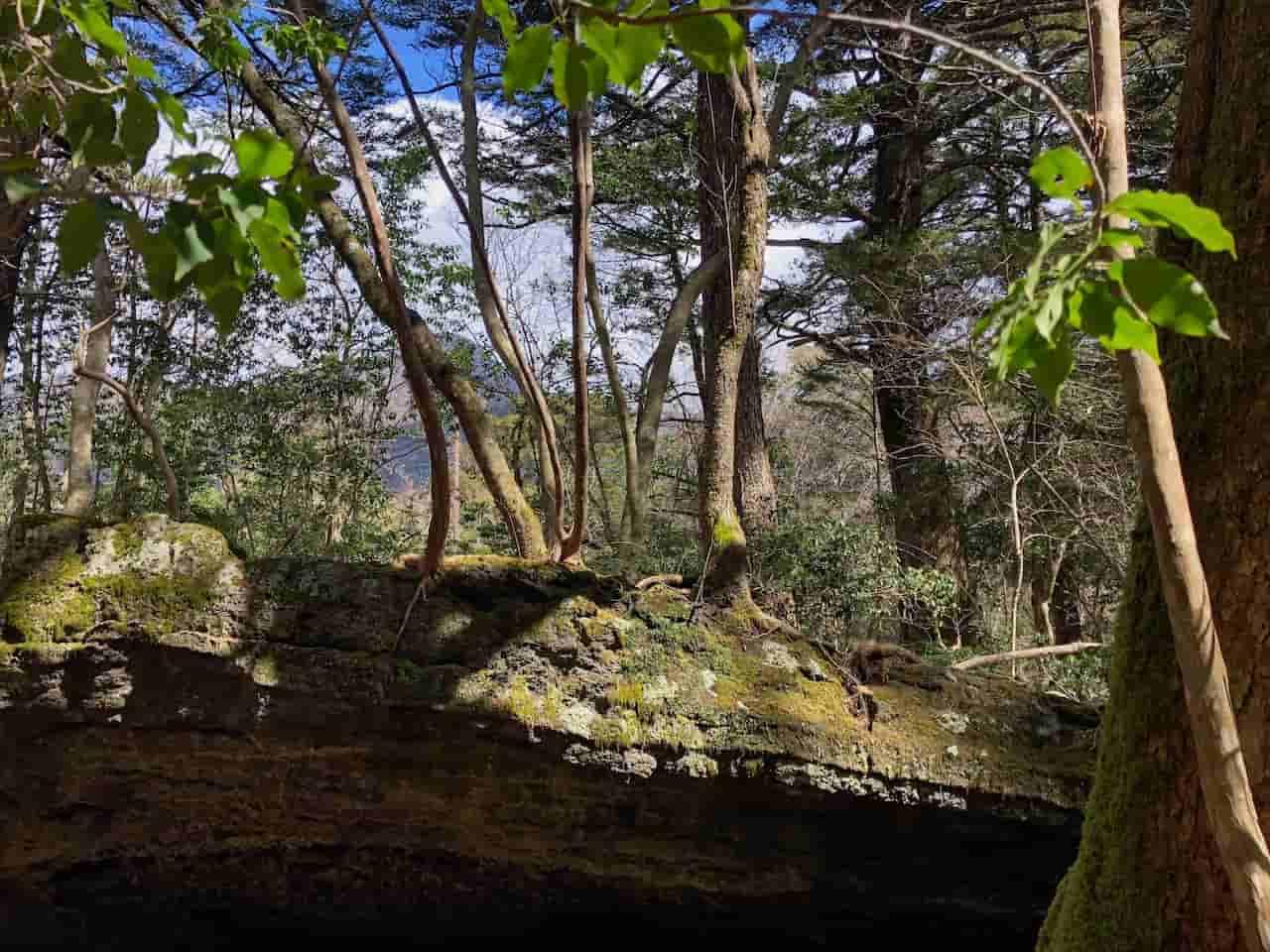 青木ヶ原樹海の溶岩流とその上の土壌
