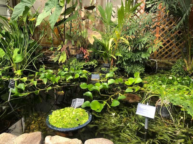 熱帯雨林温室の中の植物たち