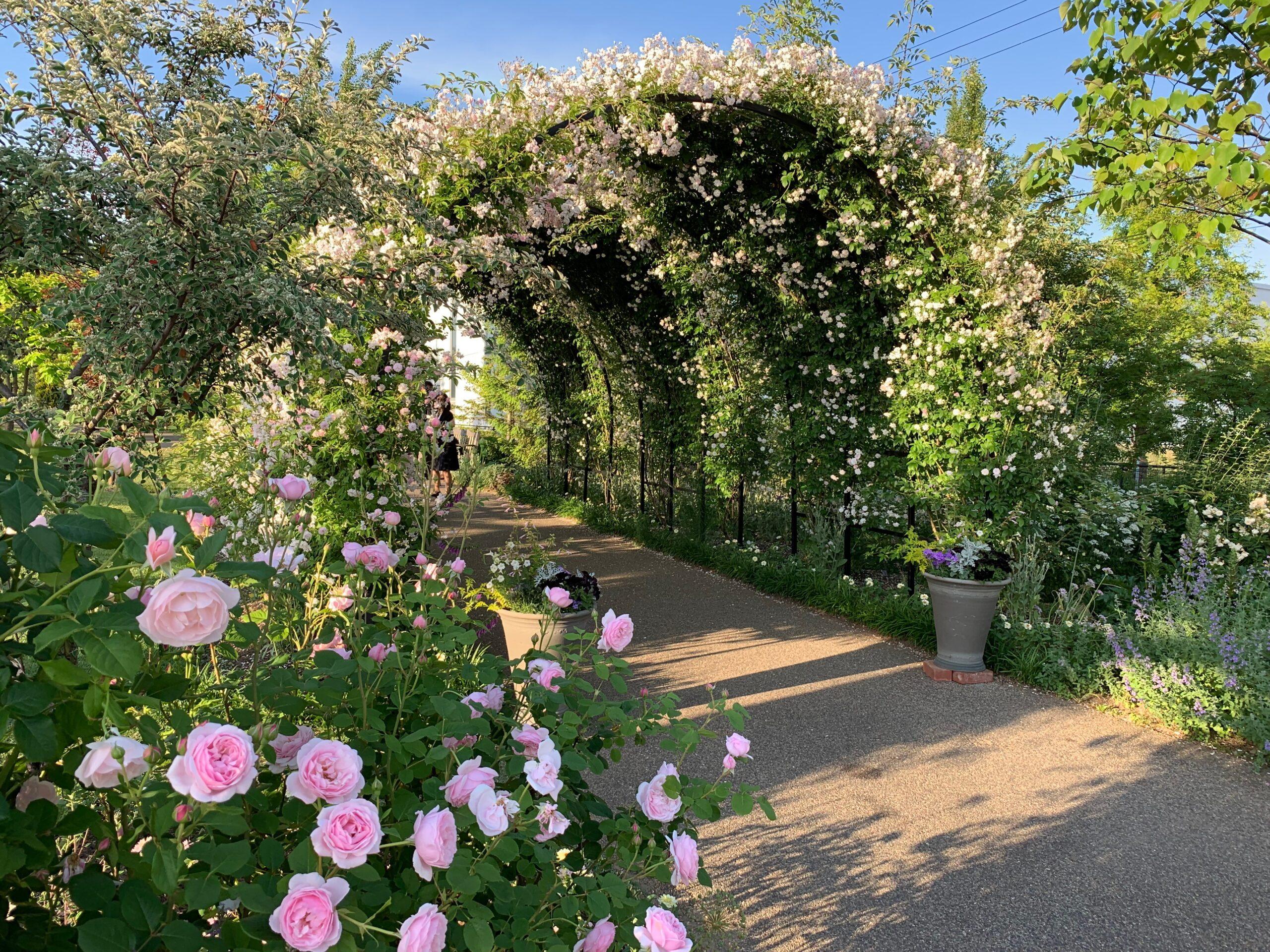 薔薇のアーチトンネル